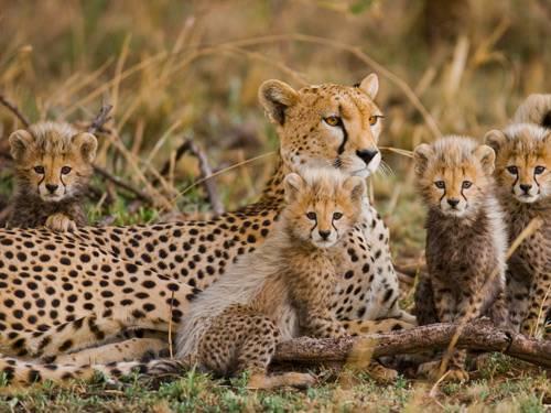 Safari Wildparken van Tanzania