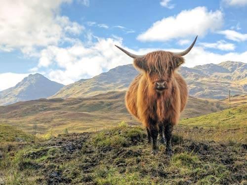 Fly-drive naar Legendarisch Schotland