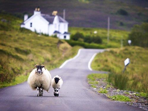 Fly-drive naar Schotland